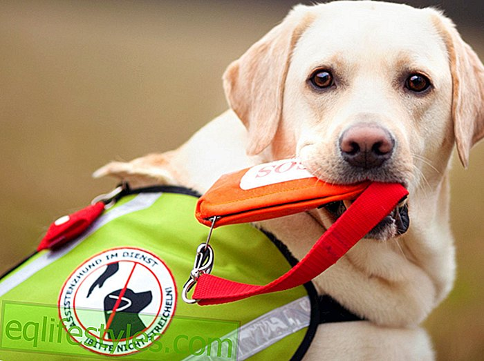 Help on four pawsWhat is an assistance dog?  - All important information about the animal helper