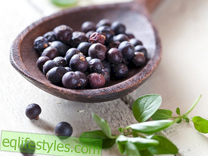Healthy - The best medicinal plants for osteoarthritis