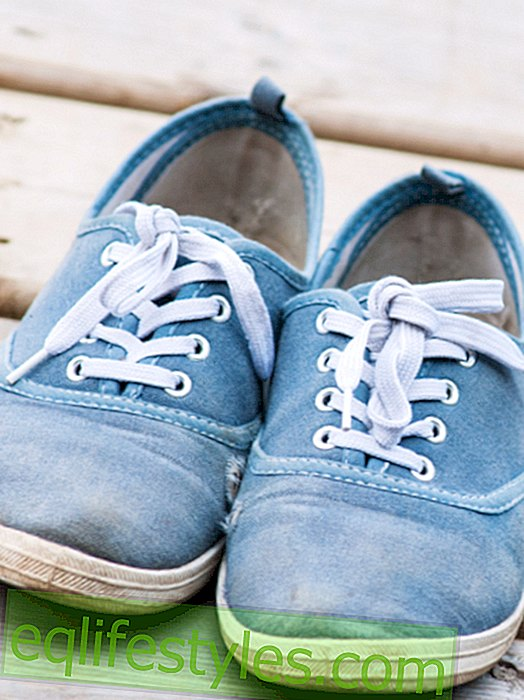 More bacteria than on the toilet: the biggest bacterial sponges are shoes!