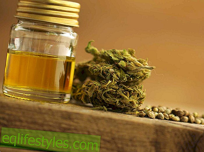 Hemp HypeCBD as Superfood?  Whereas hemp should help
