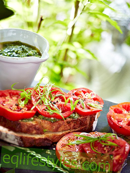 Healthy recipes with tomatoes - sun-ripened happiness
