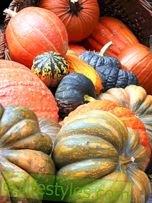 Pumpkin customer: the colorful autumn vegetables