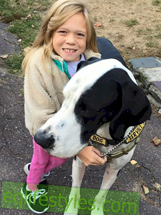 Great Dane helps sick child while running
