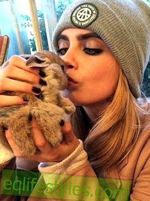 Cara Delevingne: Instagram account for the rabbit