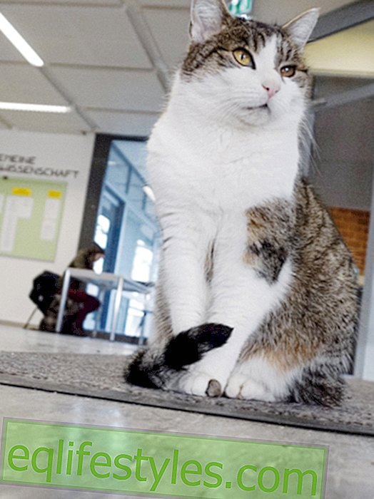 Miss Sinner: The campus cat loves the University of Hildesheim