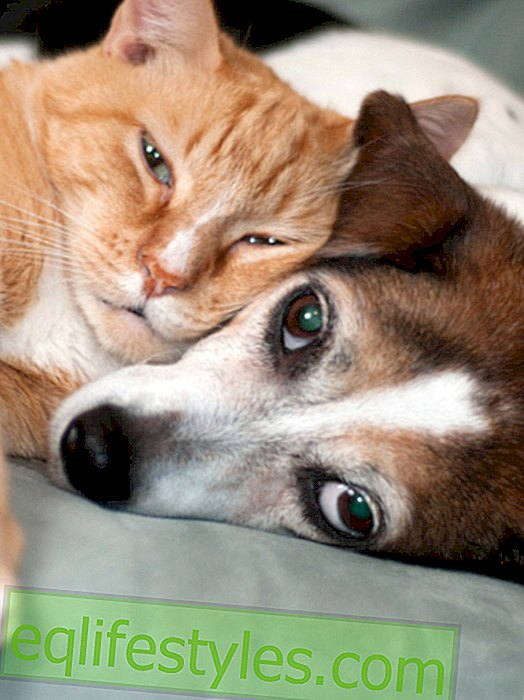 Life - Germany's sweetest dog and sweetest cat 2015