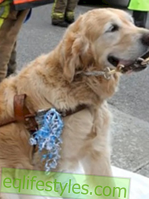 Guide dog jumps in front of a bus and saves woman's life