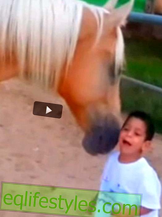 Simply touching: horse communicates with sick boy