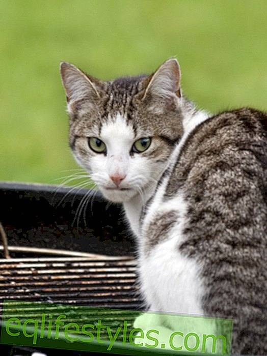 Unbelievable: Asian is grilling the neighbor's cat