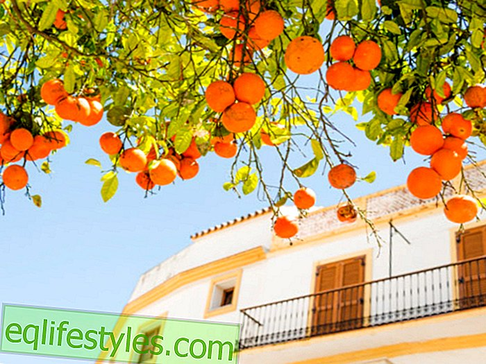 Andalusia: In the land of sun-ripened oranges