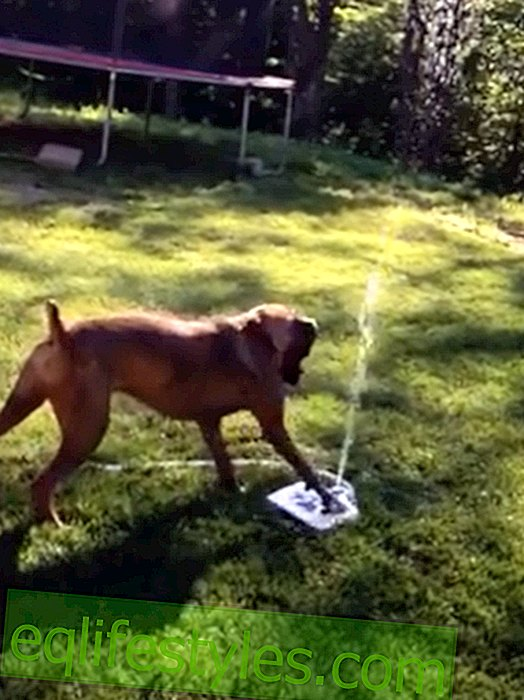 vita: Video divertente: il cane ama la fontana