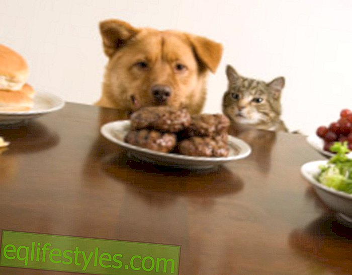 Healthy food for dog and cat