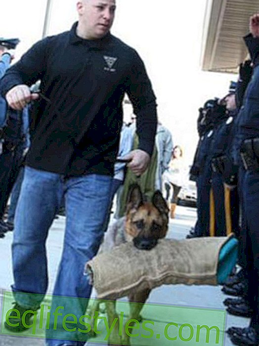 Life - Moving goodbye for a police dog