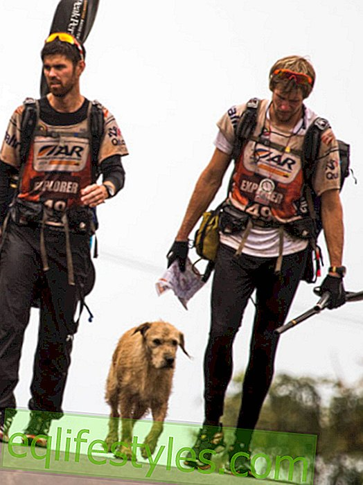 Street dog Arthur fights home in the 700-kilometer race