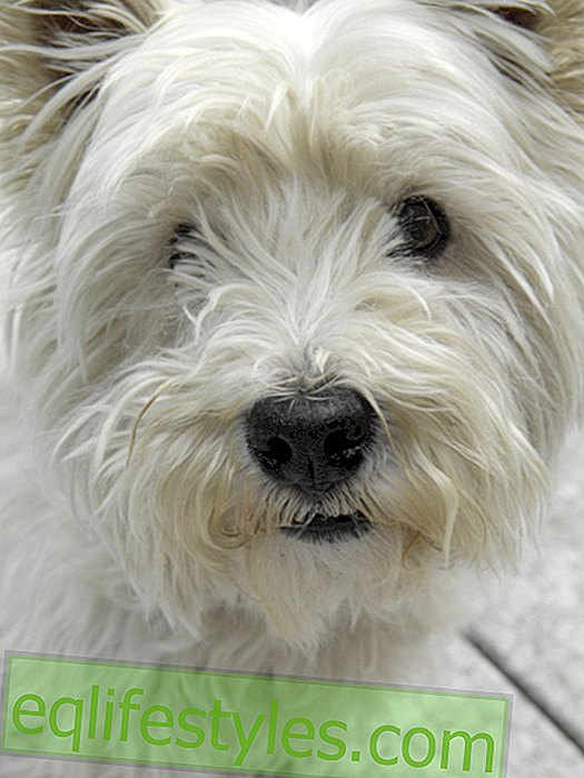 Dogs Understand: Visiting an animal communicator