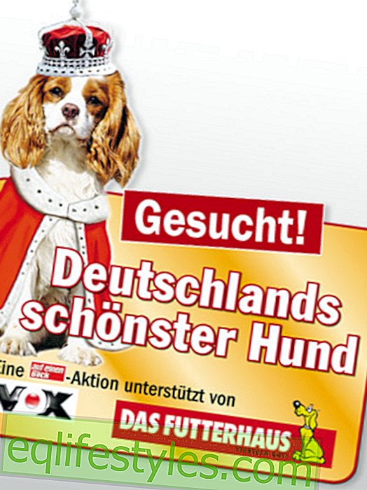 Maybe your favorite Germany's most beautiful dog?