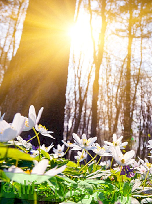 Life - Spring is coming: it's getting warm on the weekend