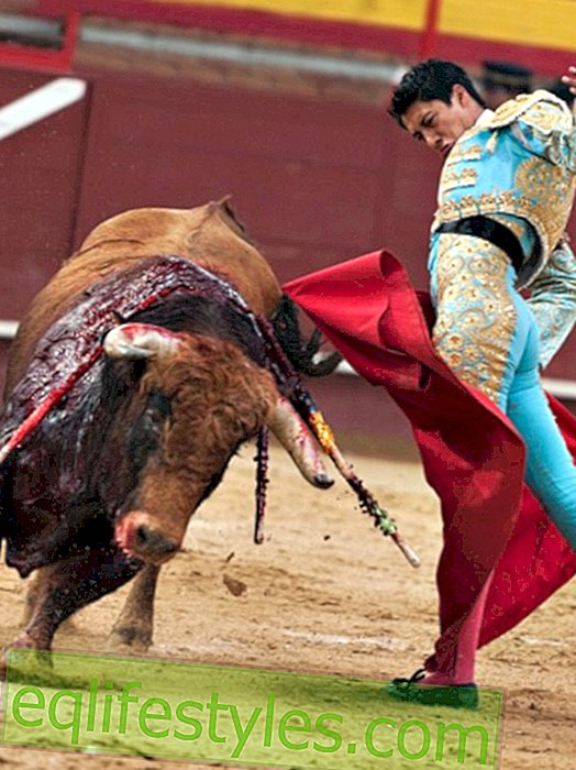 Incredible: Torero fighting Bull - with daughter in his arms