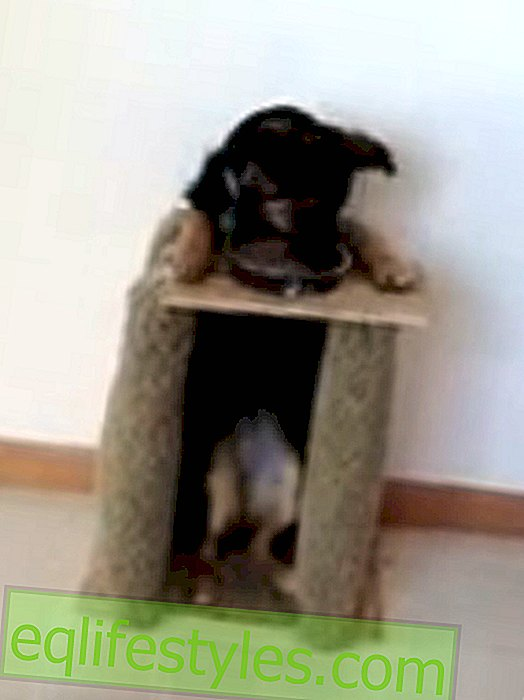 Video: Clever invention saves a dog's life