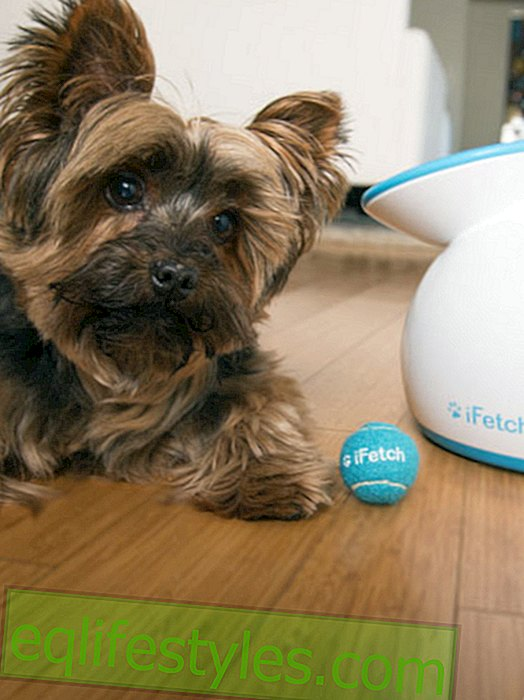 iFetch: An automatic ball throwing machine for dogs