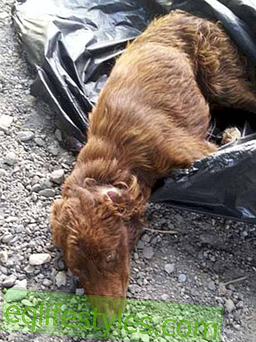 Deposed dog is rescued from dumpster