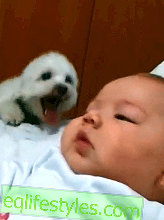 Funny: puppy wants to welcome baby