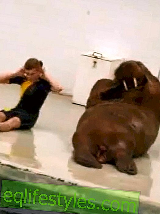 Life - Funny video: Fitness training for a walrus