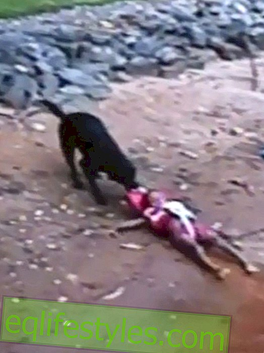 Unwanted rescue: Dog pulls out playing boys from the water