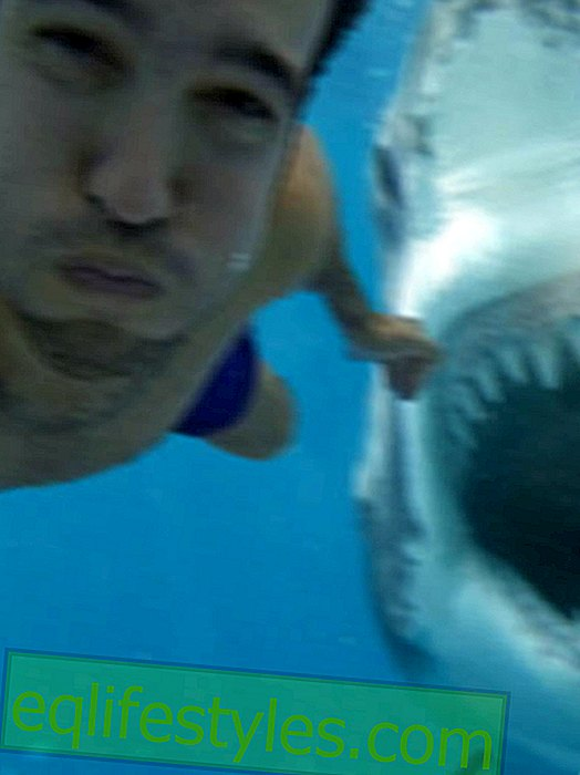 Real or fake?  This shark selfie shocks the world