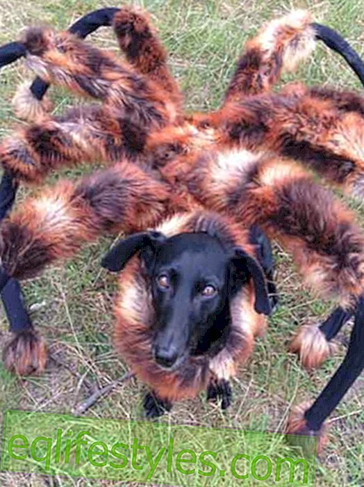 Scary Video: Spider Dog puts everyone in fear and terror