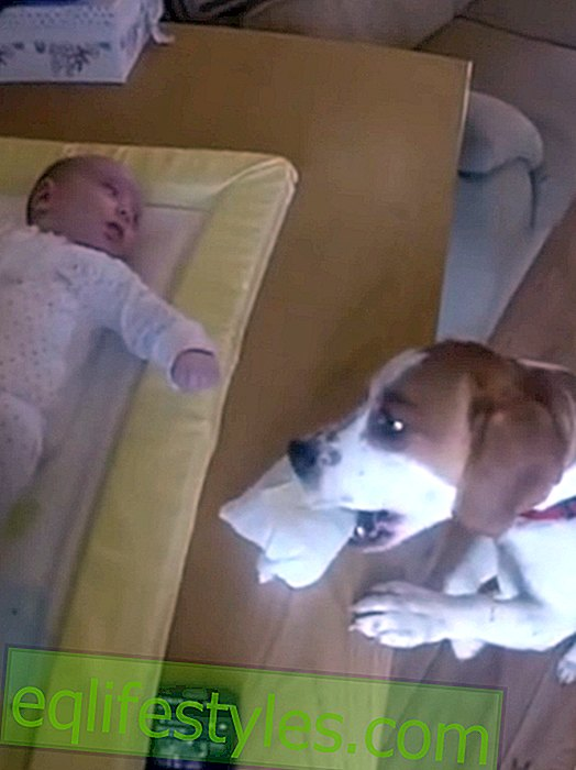 Life - Video: Dog Charlie helps to change diapers