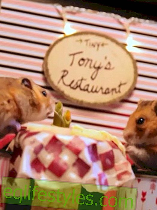 Sweet video for Valentine's Day: A date for hamsters
