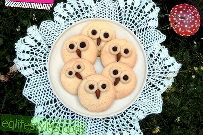 biscuits Owl