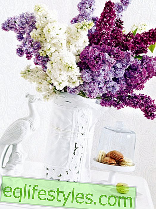 live - Lilac deco with lace: Romantic flower splendor