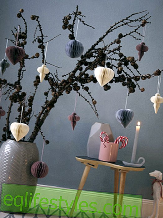 Decorating with larch twigs