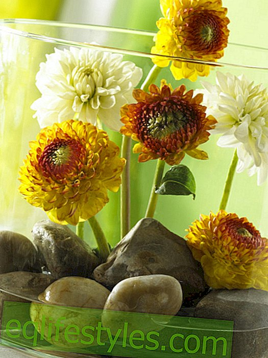 Cylinder glass with yellow dahlias and stones