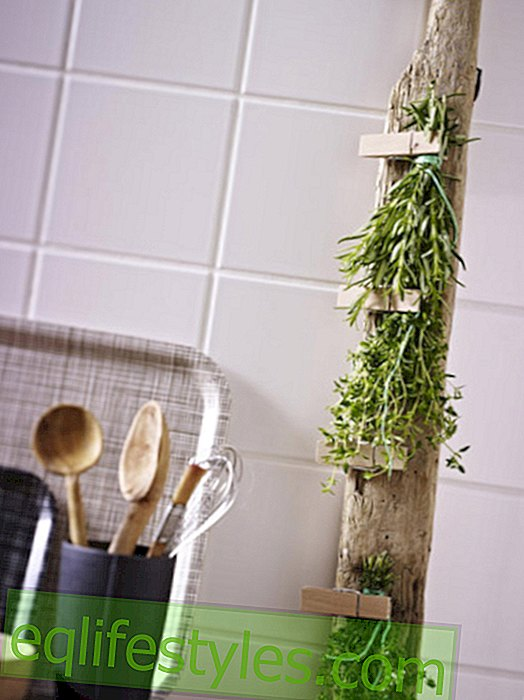 Tinker shelf with dried herbs yourself