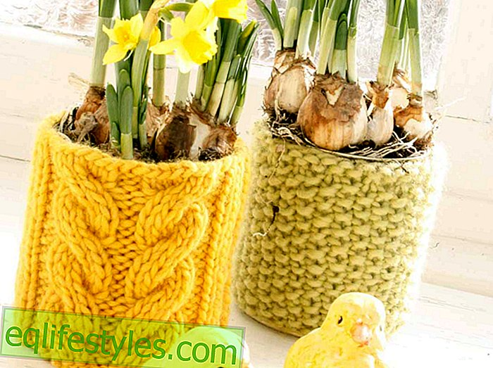 InstructionsKnitted flower pot cover with cable pattern and pear pattern