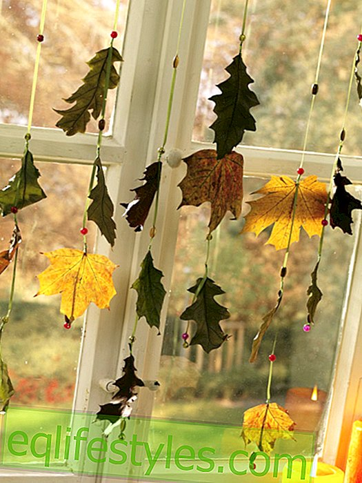Leaves Window decorations