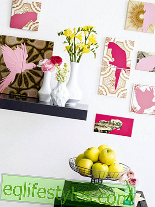 DIY tip: Tropical parrots staged in a funny way