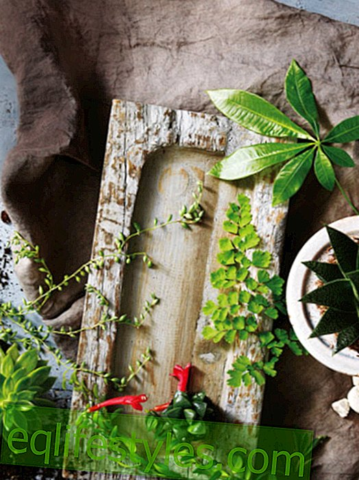 live - Houseplants: creatively decorate with plants