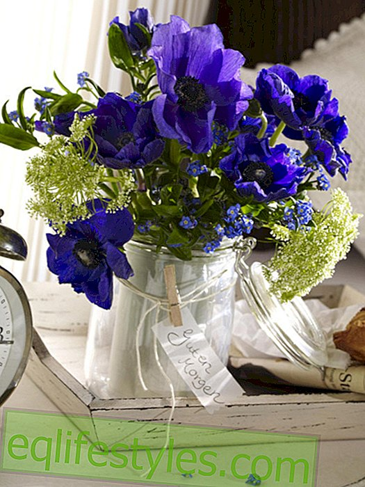Blue anemone bouquet in mason jar