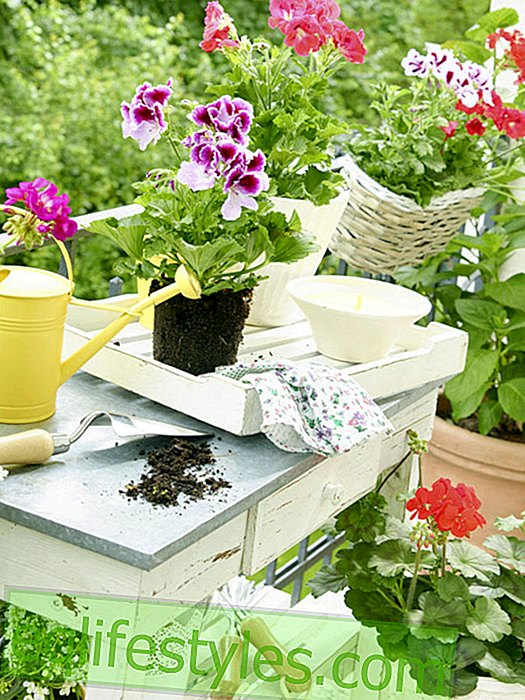 5 simple tips: So potting soil does not mold