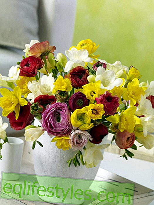 Colorful spring bouquet of ranunculus, freesia and daffodils