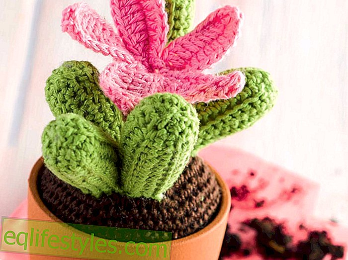 My little green cactus crochet tutorial for a cactus