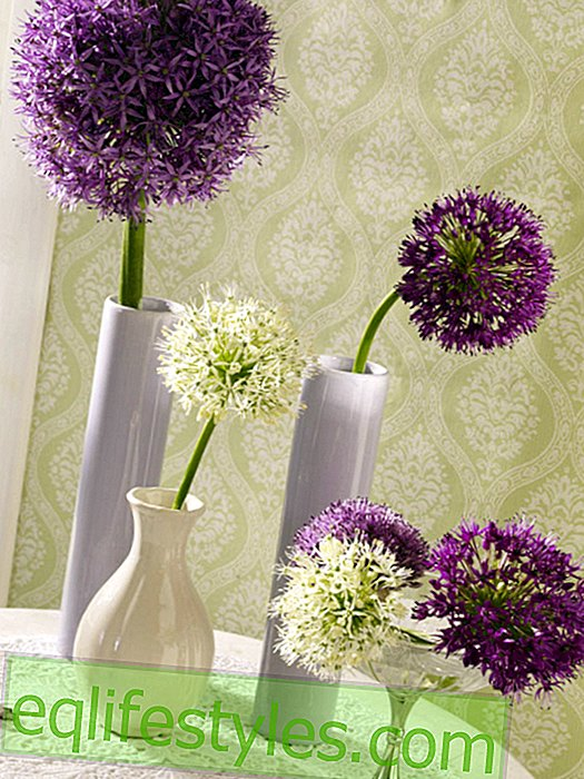 Allium: Decorate with single sheets