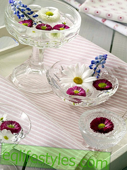 Bellis as swimming flowers