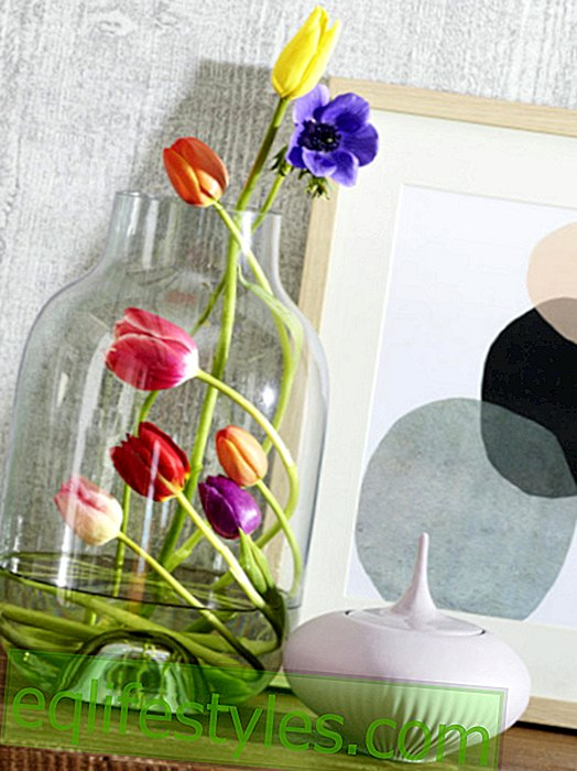 Cool floral decoration: tulips re-staged