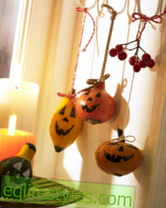 Halloween: mini pumpkin in the window