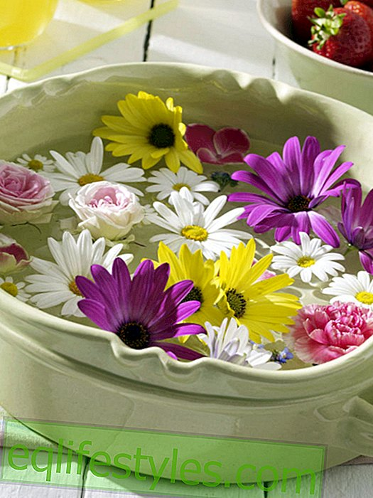 live: Daisies in the swimming bowl